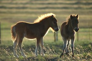 Sunlit Foals by TheDayILiveFor