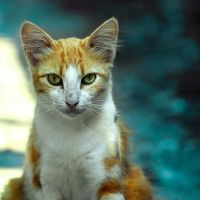 The Look by mebilia