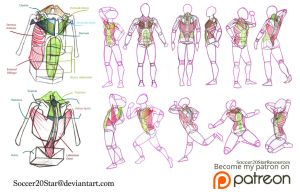 Poses with Torso Muscles by CourtneysConcepts