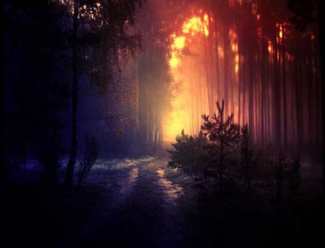 mystical forest by BaxiaArt