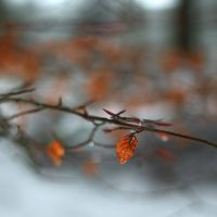 color patch in winter by ColorfulLadybug