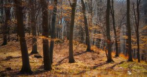 dance me to the end of love... by ildiko-neer