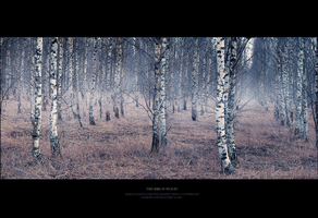 :: Birch Wood :: by snarto