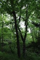 Forest of Green by durmonkee