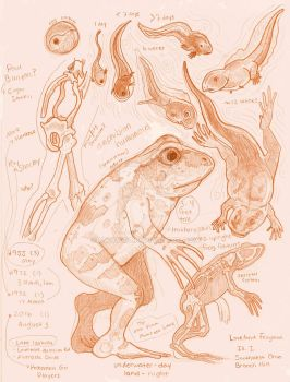 Loveland Frogman Sketch Page/Study by Kway100