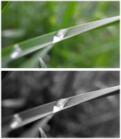 Waterdrop on Grass by JenniBeeMine