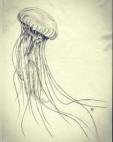 Jellyfish... a creature without heart and brain! by PennyFou