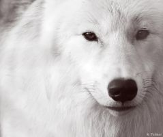 White by BlackIce-Wolf