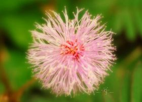 Psy-Flower by rjwarrier