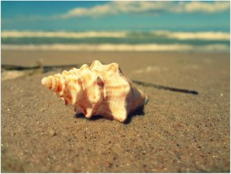 seashell by NinaEberhard