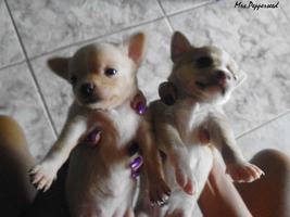 Puppies 4 by MrsPepperseed