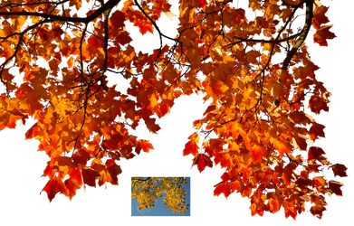 Autumn leaves 1 STOCK by AStoKo