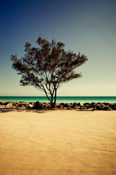 Tree at the jetties. by Stephen-Grennell