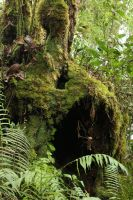 Mossy forest Stock 09 by Malleni-Stock
