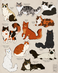 Longhaired Cats by Savkate