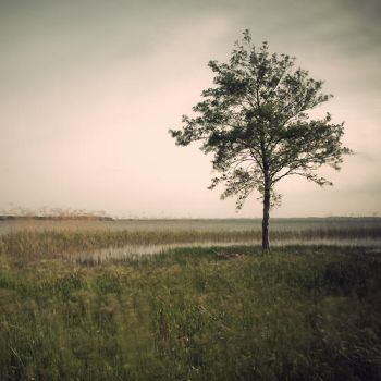 Tree in the wind by julie-rc