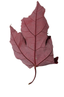 Leaf PNG Stock by BeccaB-323-STOCK