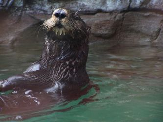 Sea Otter: Above the Blue by TheNewSun