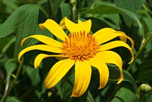 Yellow flower 6 by a6-k