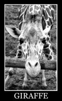 Giraffe by heatherxxll
