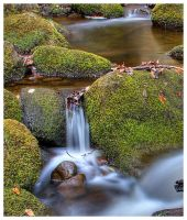 Padley Gorge Derbyshire 2 by mzkate