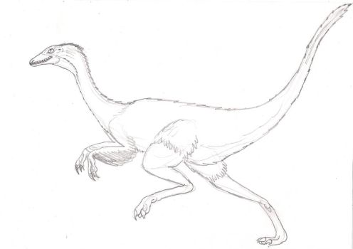 Gallimimus - skecth by Gris93