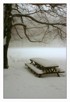 TheSnow,TheBench and TheTree by nunovix