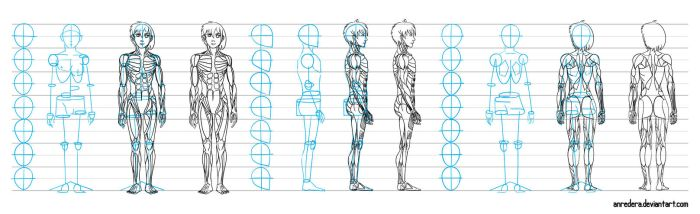 Base draw muscle of men and women - tutorial by anredera