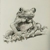 #69 Worried Frog by ComposedLines