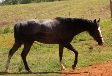 Quickdraw 5 by MountainViewStock