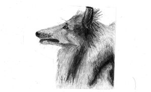 collie by Scott-A-T-art