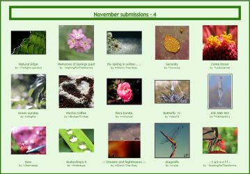 November submissions - 4 by Macro-Beginners-Club