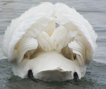 Majestic Swan butt by Yunners