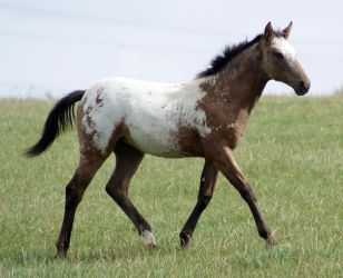 Foal stock 02 by candigal
