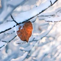 All leaves leave by WouterPera