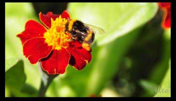 Bee by cleo72