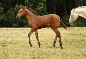 Foal Stock 07 by candigal