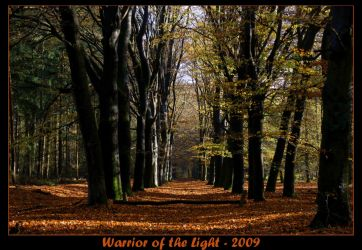 Autumn Forest 5 by WotL