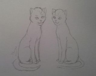 cats by lunejaune145