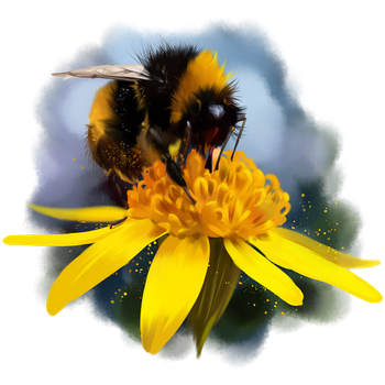 Bumblebee on a flower by Kajenna
