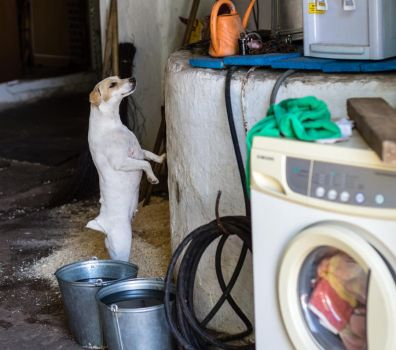 Time to wash! by Sulde