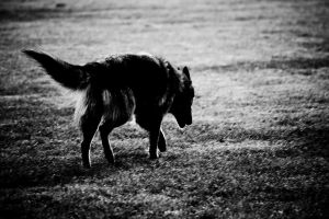 Lonely Wolf by Snofte