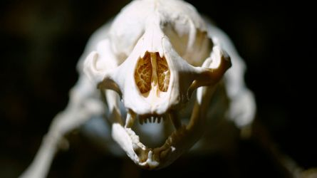 Seal Skull by Mathieustern