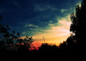 bushes and sunset, summer. by sophhks