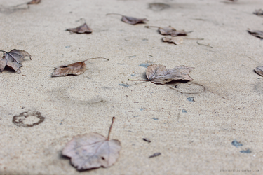 Leaf Stains 3 by softmist93