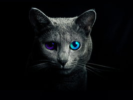 ''Eyes of the kitty'' - Wallpaper by SwedishMudkip