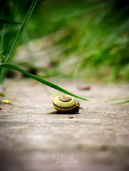Snail by IceFr3sh