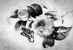 Black and White Flower by vanndra