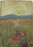 Poppy Field by OrderOfShadows