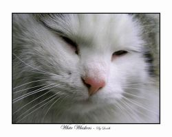 White Whiskers by lexidh
